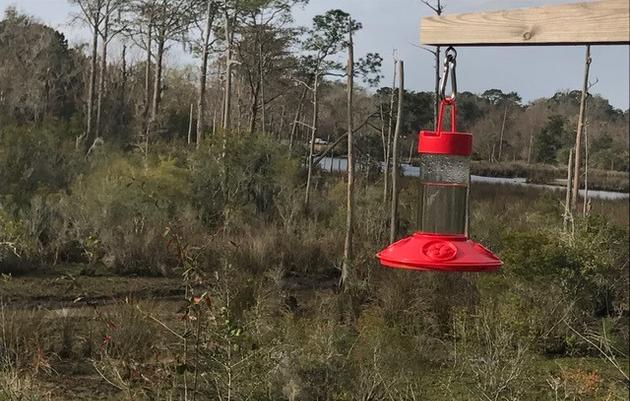 Hummingbird Migration Season on the Coast