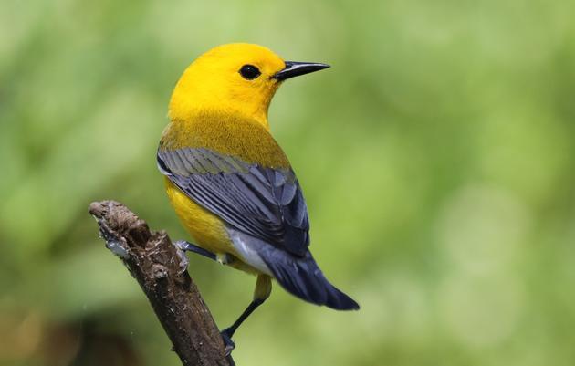 Important Bird Areas (IBA)