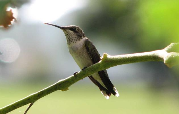 Hummingbird and Nature Festival