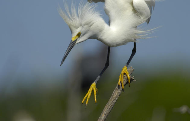 Checklist: Birds of the MS Coastal Counties