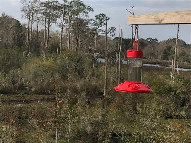 Hummingbird Migration Season on the Coast