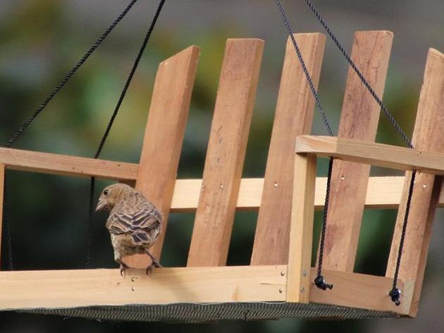 Creating Bird Friendly Communities