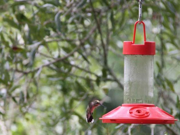 Hummingbird and Nature Festival